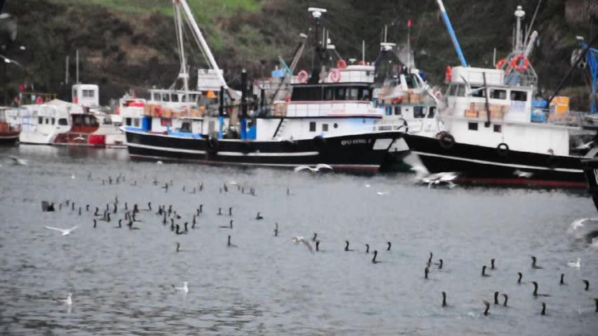 Commercial fishing vessels and seagulls - HD stock video clip