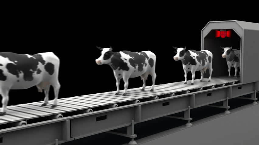 Cows on the conveyor belt, 4K. Seamless loop, alpha channel.