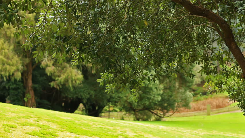 Green tree branches trembles in the wind  - HD stock footage clip