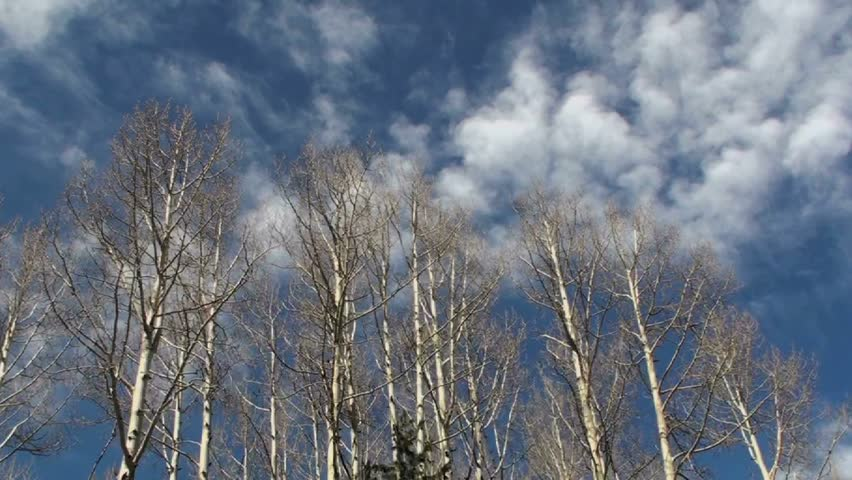 Time Lapse, Clouds roar over bare Aspen trees in winter. 1920x1080 - HD stock video clip
