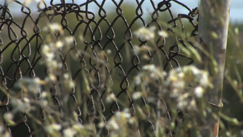 This is a close up shot of an old chain link fence with flowers out of focus in the foreground. - HD stock video clip