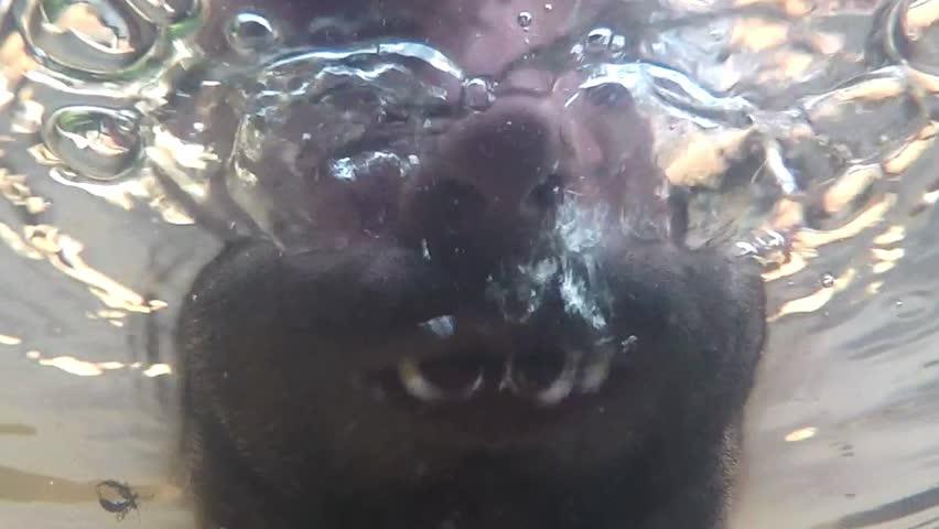 free wet ebony
