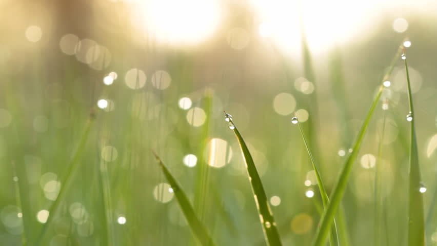 Blurred grass background with water drops.   | Shutterstock HD Video #1161901