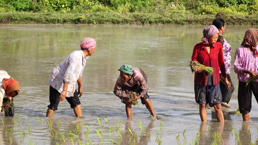 KAMPONG TRACH, CAMBODIA - SEP 26,2015: Farmers happy working together