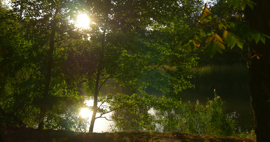 Forest Lake, River Bank, Trees on a Horizon, trees' trunks, White Sky, Sun Shines through Tree Branches , Rippling Water, Trees' Reflection, trees' silhouettes, Green Reed, Summer, Evening, - 4K stock footage clip