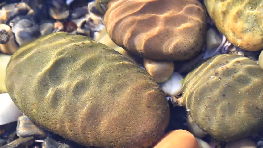 Pebbles in sea shallow water - HD stock video clip