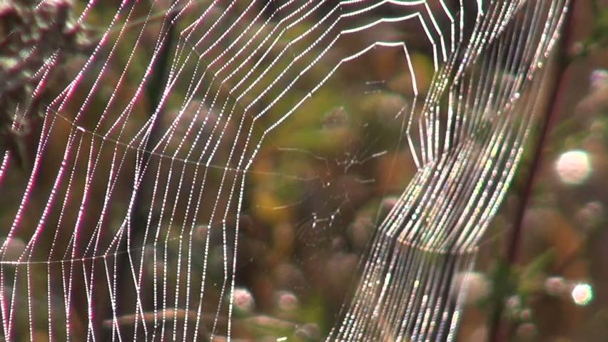 Spider web in the autumnal sunshine