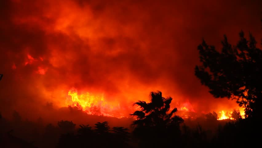 Fire storm in the forest hell on earth; horrific fire destroys thousands of acres of trees | Shutterstock HD Video #1303660