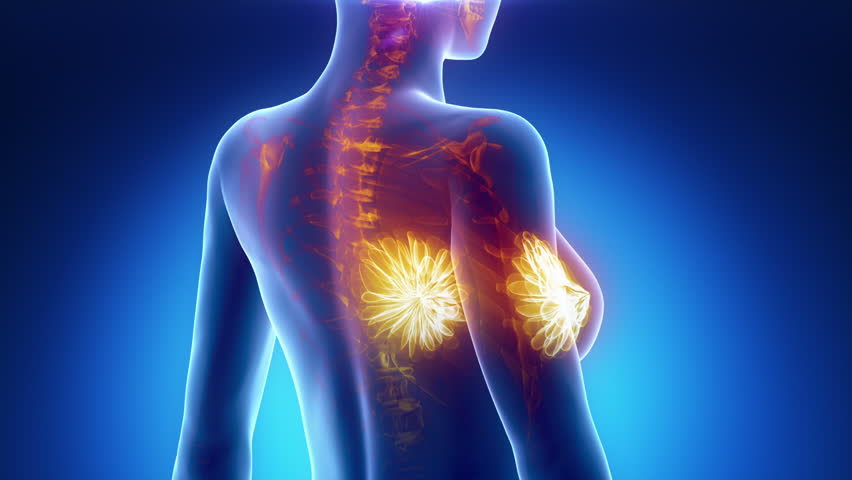 Female BREAST anatomy in blue x-ray loop