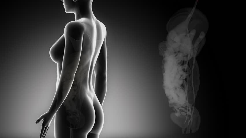 Female ABDOMINAL organs details in black x-ray loop - HD stock footage clip