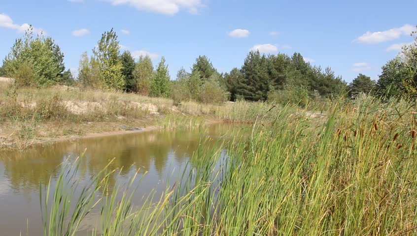 small lake on a summer day - HD stock footage clip