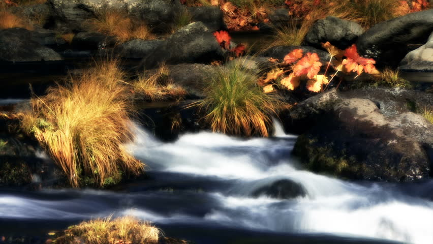 A gentle stream flows between rocks and autumn plants. - HD stock footage clip