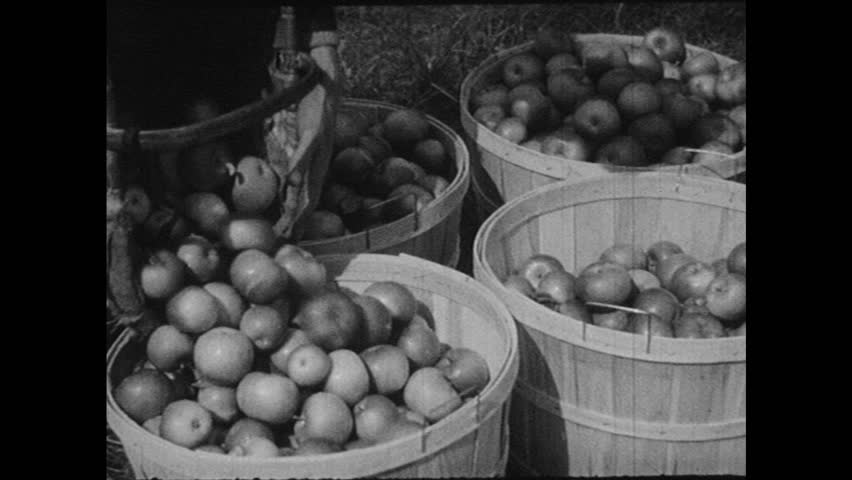 UNITED STATES 1940s: Apples poured in baskets / View of field / Hand slice meat / Display of fish / Dish of butter.