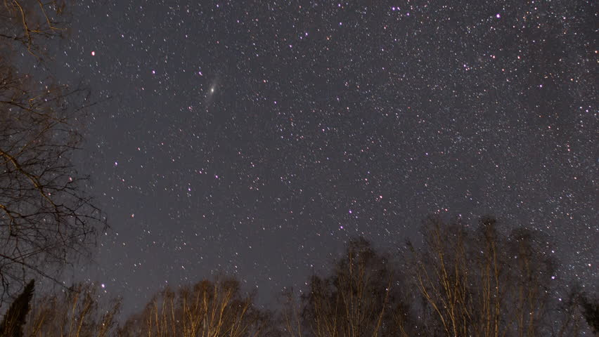 Starry sky against a background of trees. UltraHD (4K)