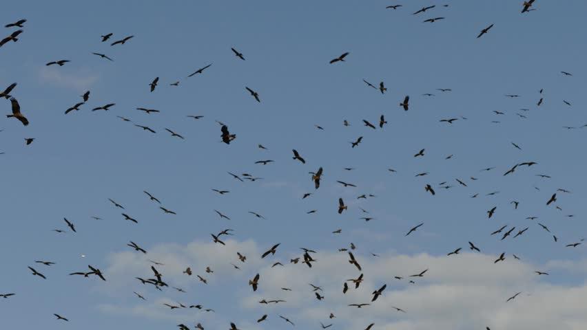 birds dating site