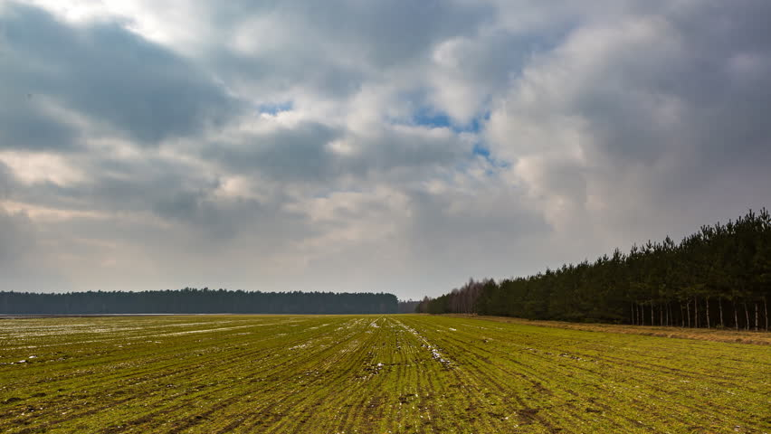 4k timelapse of young cereal field under cloudy sky at early springtime. 4096x2304, 25fps  #14963518