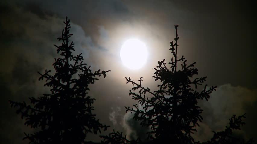 Full Moon Idaho Full Moon Pines And