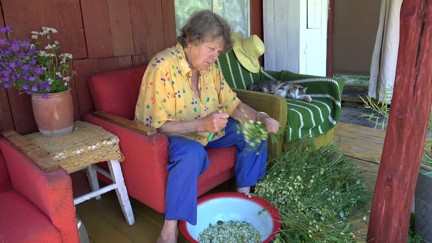 Old herbalist grandmother woman pick camomile flower blooms for herbal medicine and tabby cat sleep on outdoor armchair. Static shot. | Shutterstock HD Video #14999338