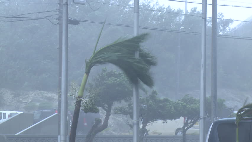 Hurricane Extreme Strong Winds Lash Palm Tree. Palm trees thrash in strong winds as a hurricane approaches a small Pacific island. Shot in full HD on Sony EX1 XDCAM 1920x1080 30p - Fitow - HD stock footage clip