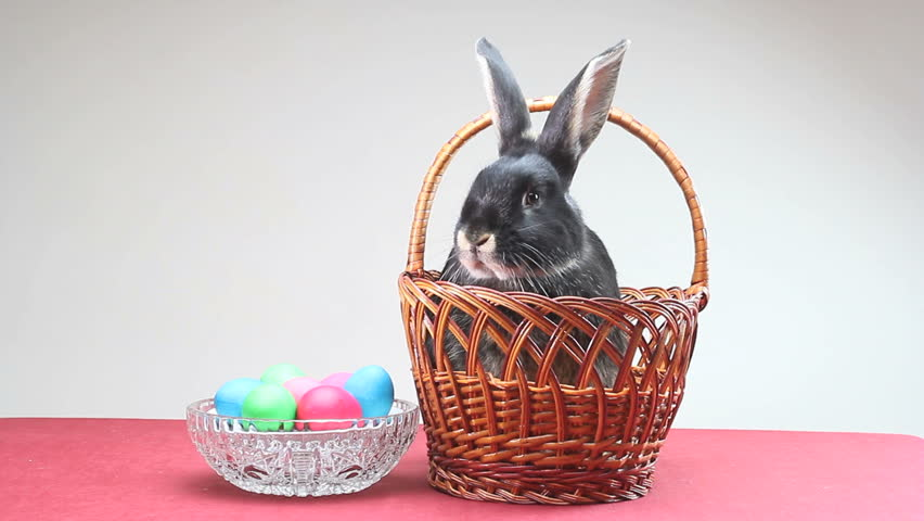 Small black rabbit jumped out of Easter baskets - HD stock footage clip