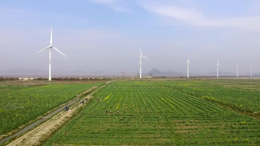 how to kill windmill grass