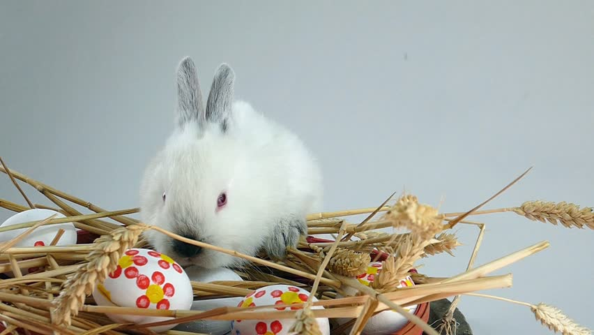 bunny rabbit sniffing around - photo #36