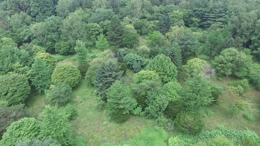 Aerial: Summer of primeval forest