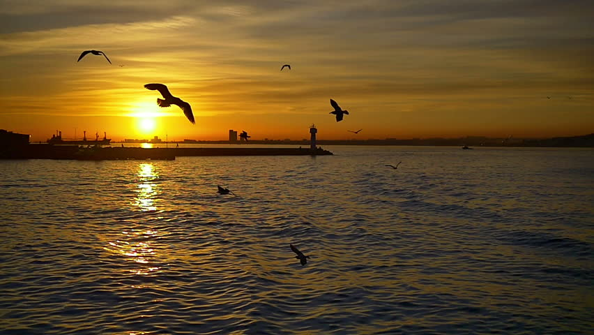 Slow Motion, Ship following seagulls flying in the harbor. The atmosphere at sunset point is one of the most relaxed you will ever experience in Istanbul. Seagull flies into the sky towards the sun.