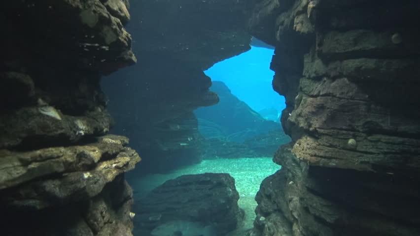 Lisbon Oceanarium underwater cave - HD stock footage clip