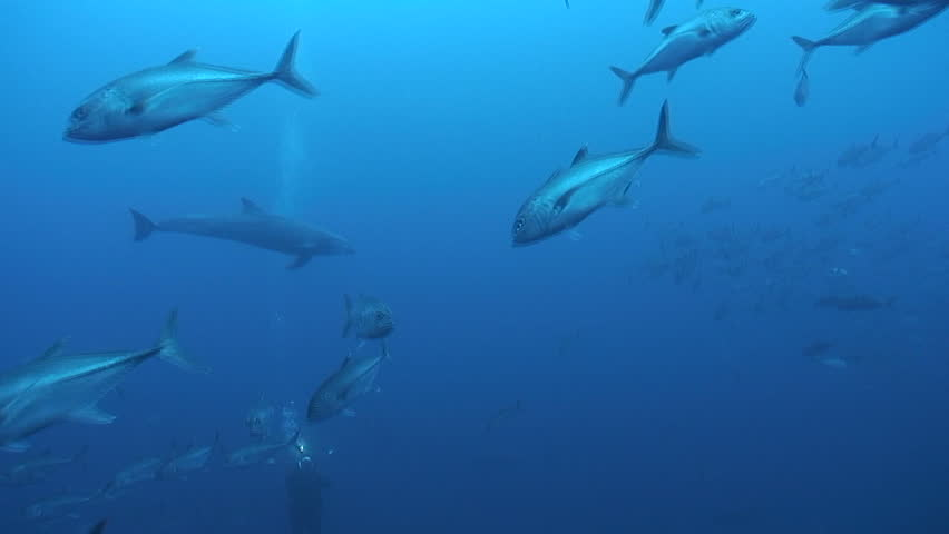 School of Dolphins | Shutterstock HD Video #1542772