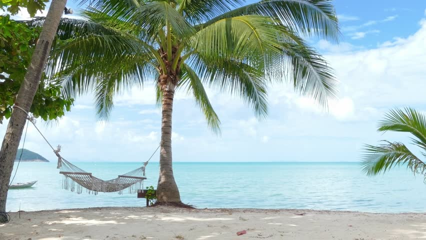 Hammock and palm trees on the beach | Shutterstock HD Video #15457051