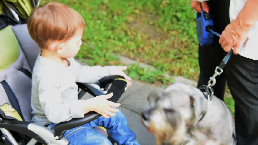 Little boy and a dog - HD stock footage clip