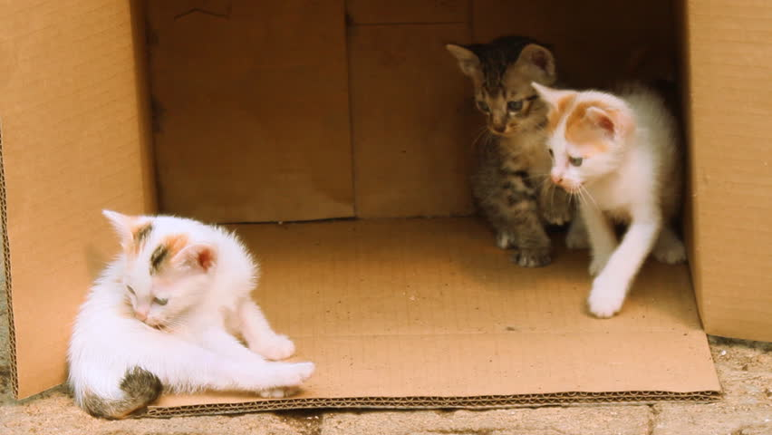 Kitten playing with Gold tabby kitten on box  - HD stock video clip