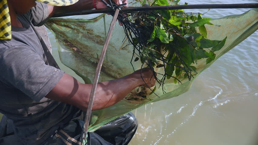 Upper close-up view of fisherman pulling drop net out of the river and catching prawns