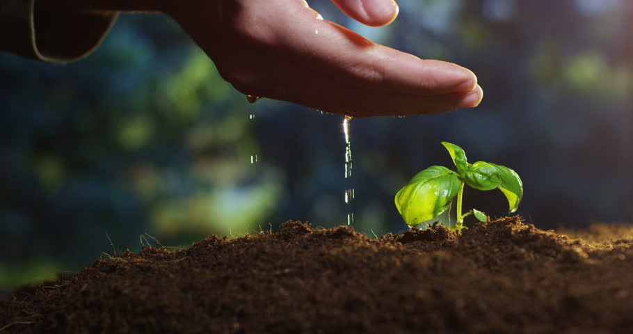 A young beautiful hand watering a plant in a romantic natural and magical atmosphere | Shutterstock HD Video #15711913