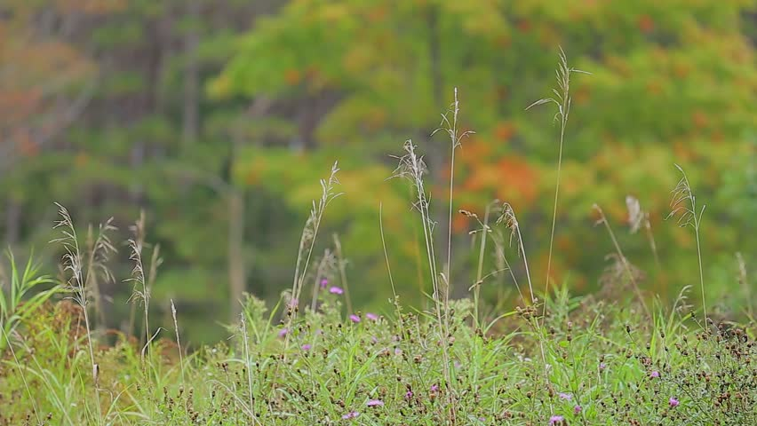 Rural meadows and fields with shallow focus on grass closest to camera   Shutterstock HD Video #15849037
