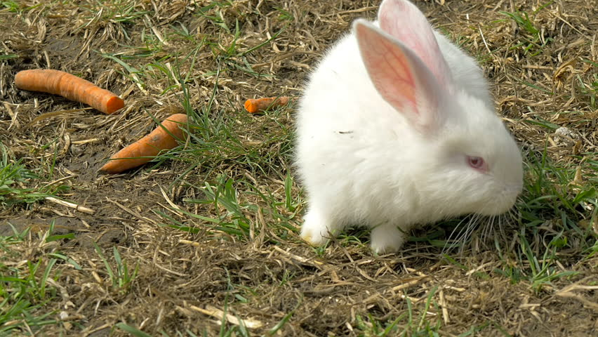 bunny rabbit sniffing around - photo #22