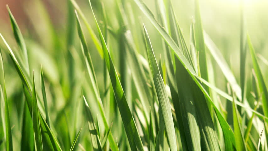 Green grass and sunlight, morning spring breeze - HD stock video clip