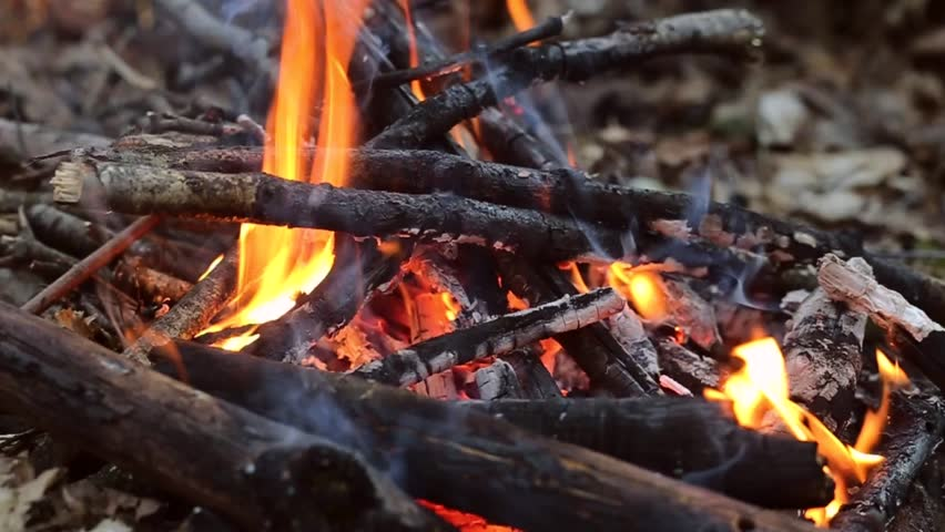 Burning fire in the forest - HD stock video clip