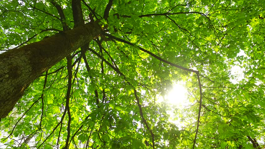 A Beautiful Tree With Spring Green Life Foliage Basking In