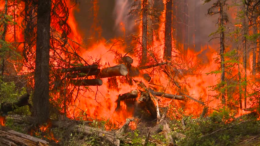forest fire - HD stock footage clip