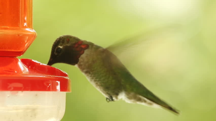 Image result for Hummingbirds Ultra Slow Motion Images