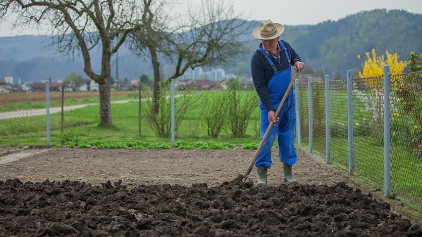 A farmer is throwing a well-rotted manure on the other side of a garden bed using a garden fork. Wide-angle shot. - HD stock video clip