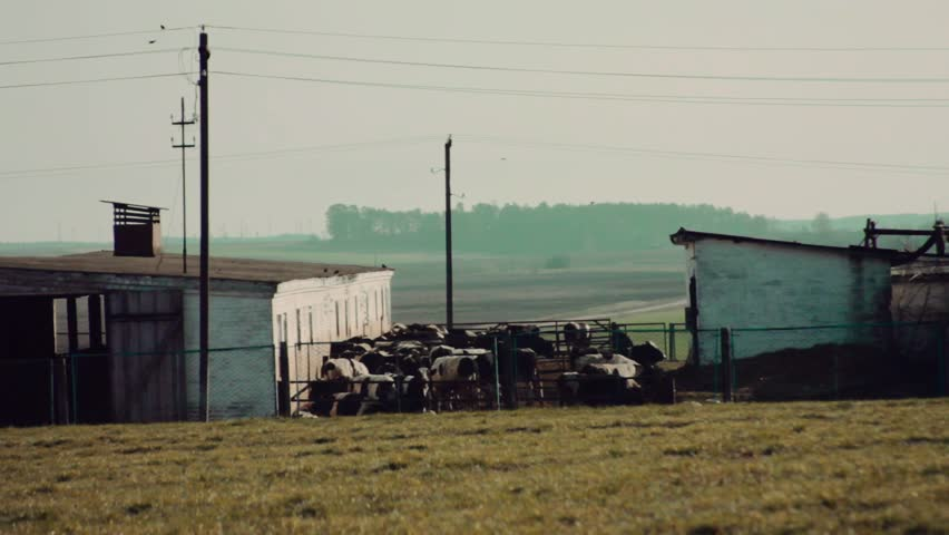 cowshed in a field - HD stock footage clip