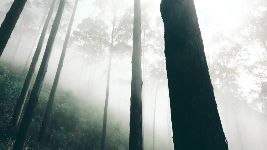 Misty Forest with Moving Fog, Lipton's Seat in Sri Lanka, Panning Shot. - HD stock footage clip