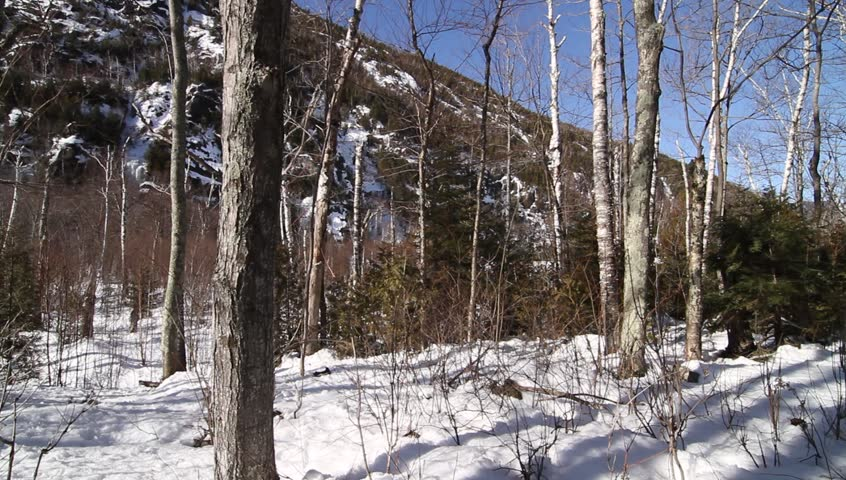 Scattered trees rise out of snow with hill in background - HD stock video clip
