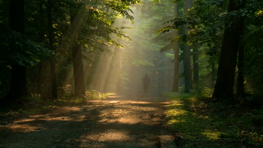 Man Walks Dog Down Forest Road With Golden Shafts Of