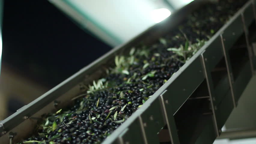 Oil mill - olive oil production - Conveyor belt constantly feeding olives into small scale olive oil mill factory for extracting extra virgin olive oil - HD stock video clip