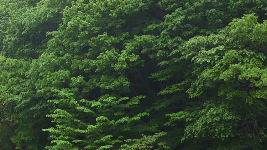 Rainfall, Forest Background | Shutterstock HD Video #16813108