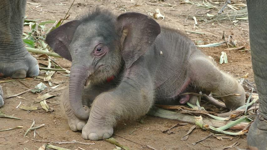 baby elephant - 4K stock video clip